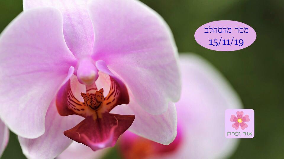 מסר מהפרחים לסופ