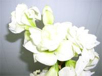 flower37